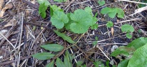 forage_plants (photo not by Matt Birkinshaw)