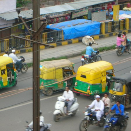 rickshaws held up by cows in Indore, India, photo by Matt Birkinshaw