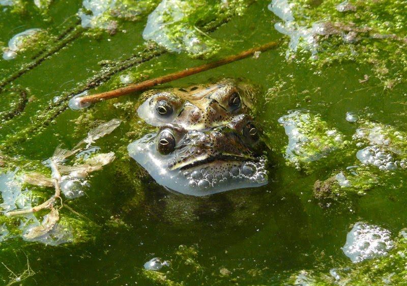 Lodhi Garden -  Slimy Toads