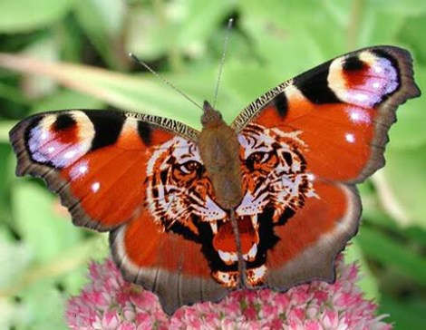 butterfly-tap-india